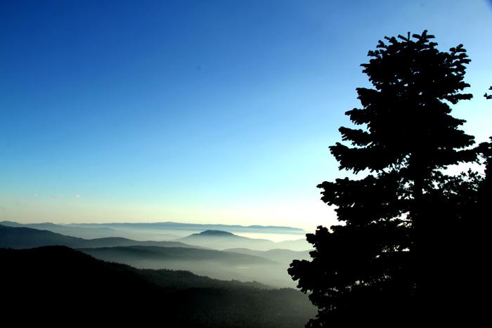 Pine_Mist