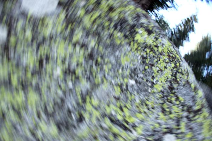 Spining_Lichens
