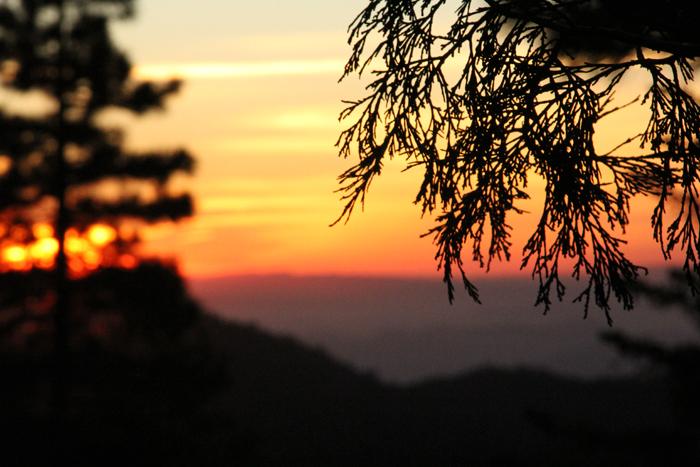 Sunset_Pine