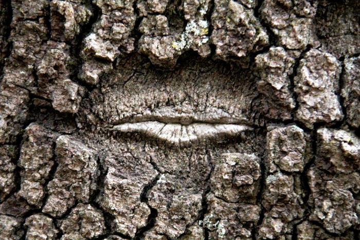 Tree_Lips